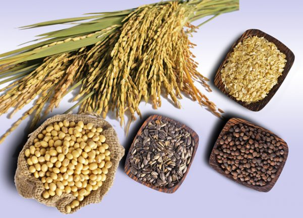 Các loại ngũ cốc nguyên hạt trong thực đơn 7 ngày trong tuần cho gia đình